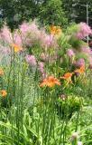 Tamarisk & Day Lilies