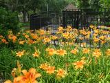 Day Lily Patch by Todlers' Playground