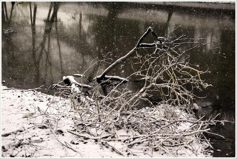 Copie de Branche neigeIMG25373.JPG