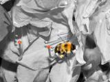 Bumblebee Splash