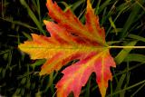 040921 Fall Color