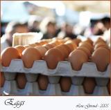 Eggs - Febuary 22-05