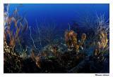 Corais incrustados no Windjammer