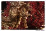 Paraty - Underwater