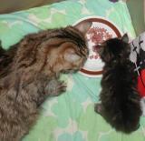 Hilda dining with mom