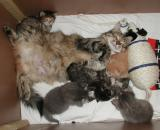 Roosa enjoys her babies