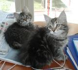 VAppu & Bella
