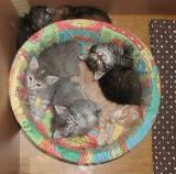Blue, Riki, Viki, Hulda
