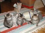 The kittens at 5 weeks