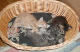 Boys and Hilda in the basket