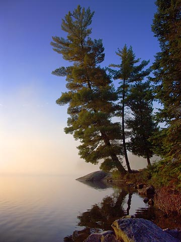 Pines at Sunrise 5779-2