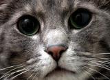 1654-I-love-cats.jpg