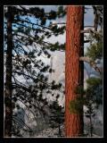 Redwood Frame
