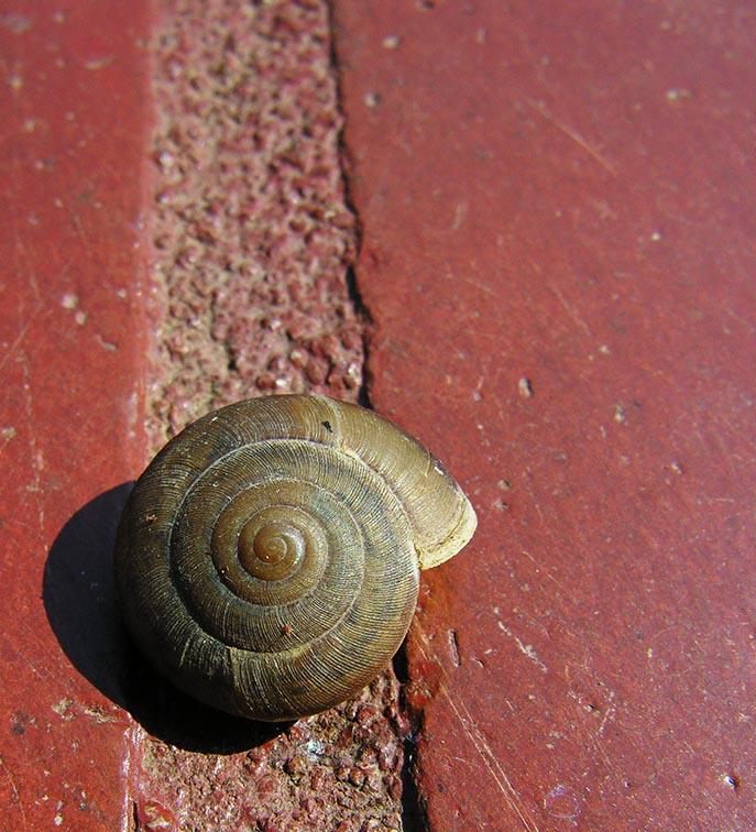 Snail - Bangkok