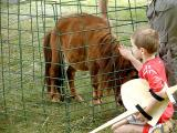 Miniture shetland pony.jpg(492)