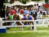 Pony Rides.jpg(459)