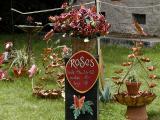 Roses.jpg(190)