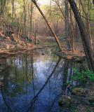 Wide Water Swamp
