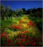 Ciao-Toscana-01ds.jpg