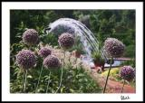 Echinops with Curved Fountain Splash