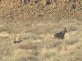 Kudu and Child