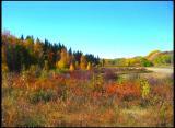 Gwynne Valley Fall Photo