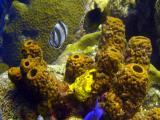 Frog Fish ( the yellow thing )