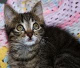 Baby Kitten Eyes.jpg