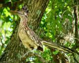 birding_by_truck