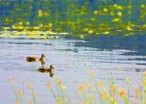 ducks and plants.jpg