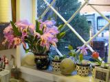 Orchids on window sill