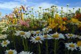 Flower Jungle