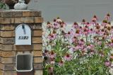 Neighbor's Mail Box
