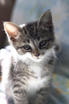 Kittie Haley.jpg