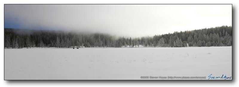 Bison in the Mist : Yellowstone