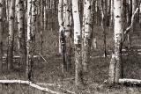 Banff (_P9E2914 Tone.jpg)