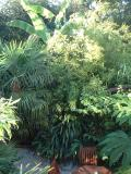 David's garden in Norwich (UK)