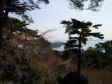 Pine on Matsushima Hill