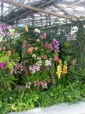 Orchids and ferns