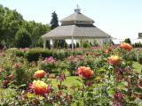 Rose Garden DSCN4252.jpg