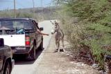 Burro on the road at Oil Slick Leap