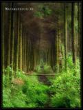 deerinwoods.jpg