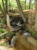 Moore Pond near Mink track