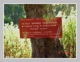 Local Languange telling no deforestation
