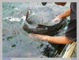 Bermain2 dgn Ikan