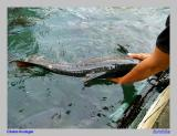 Bermain2 dgn Ikan Jinak di Kolam