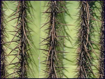 Cactus15.JPG