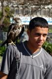 Guy posing with falcon, Tahrir Square, Yemen