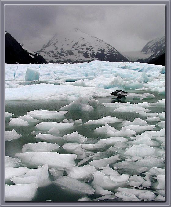 Icy Summer Lake at Portage Glacier