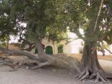 Sidi Bou Lifa Marabout